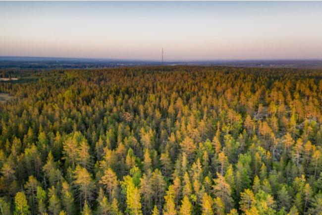 drönarfoto över skogslandskap i västerbottens län
